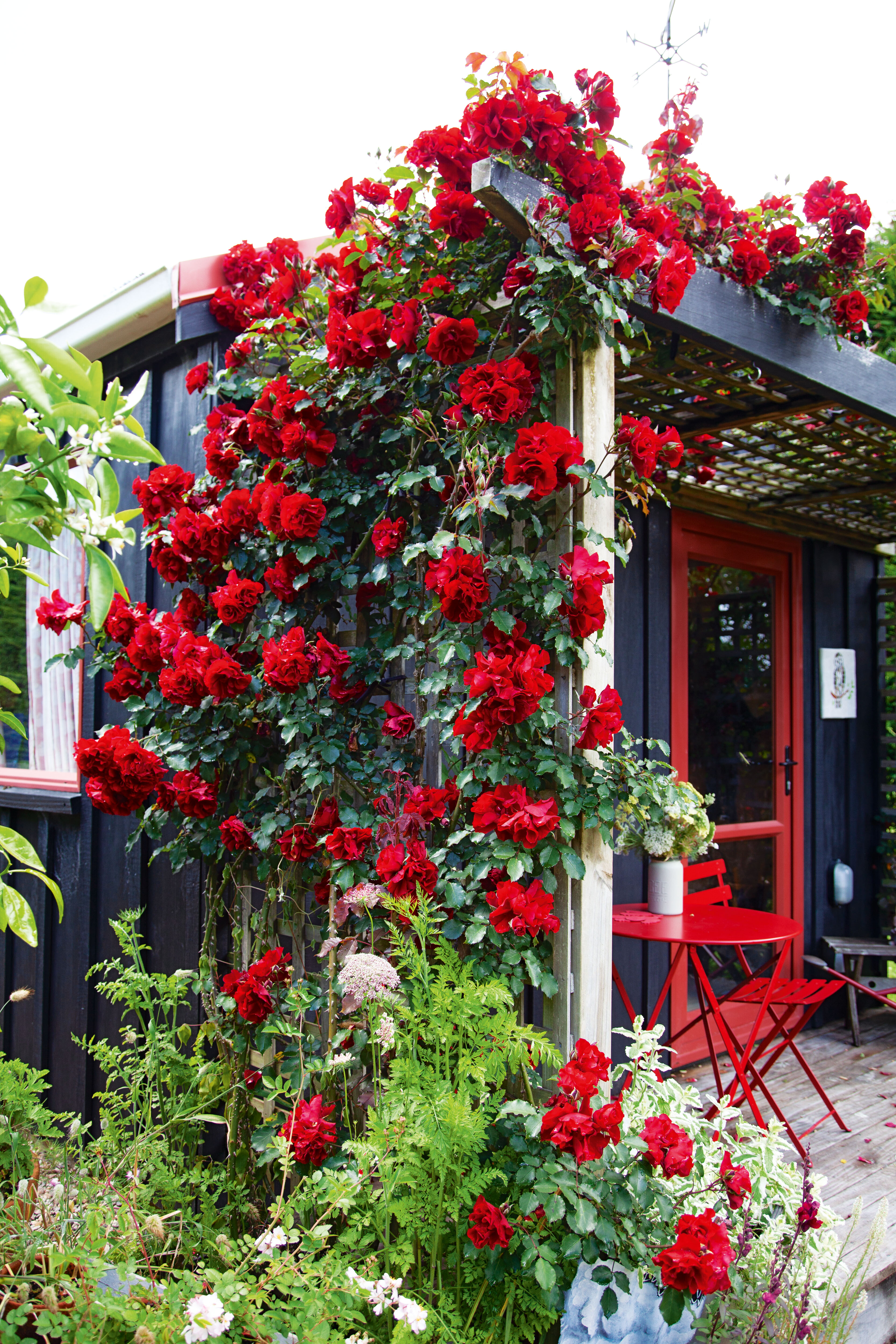 A tiny house with a large garden is a dream come true for former ...