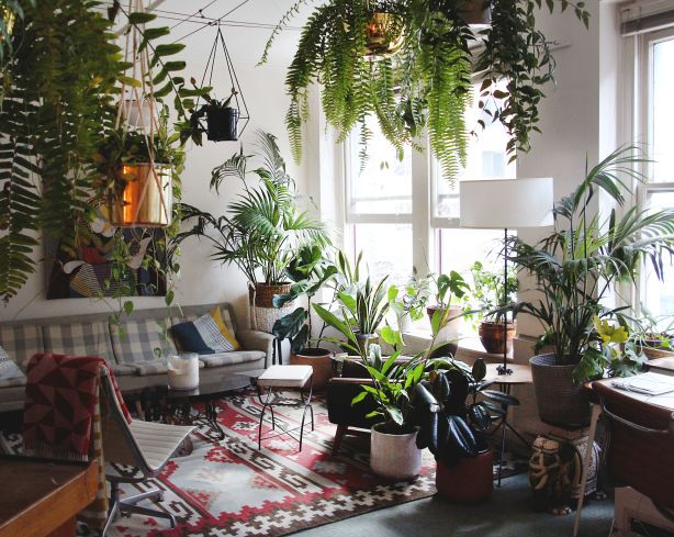 Bigger Is Better The Best Indoor Plant Trends For 2019 Stuff Co Nz
