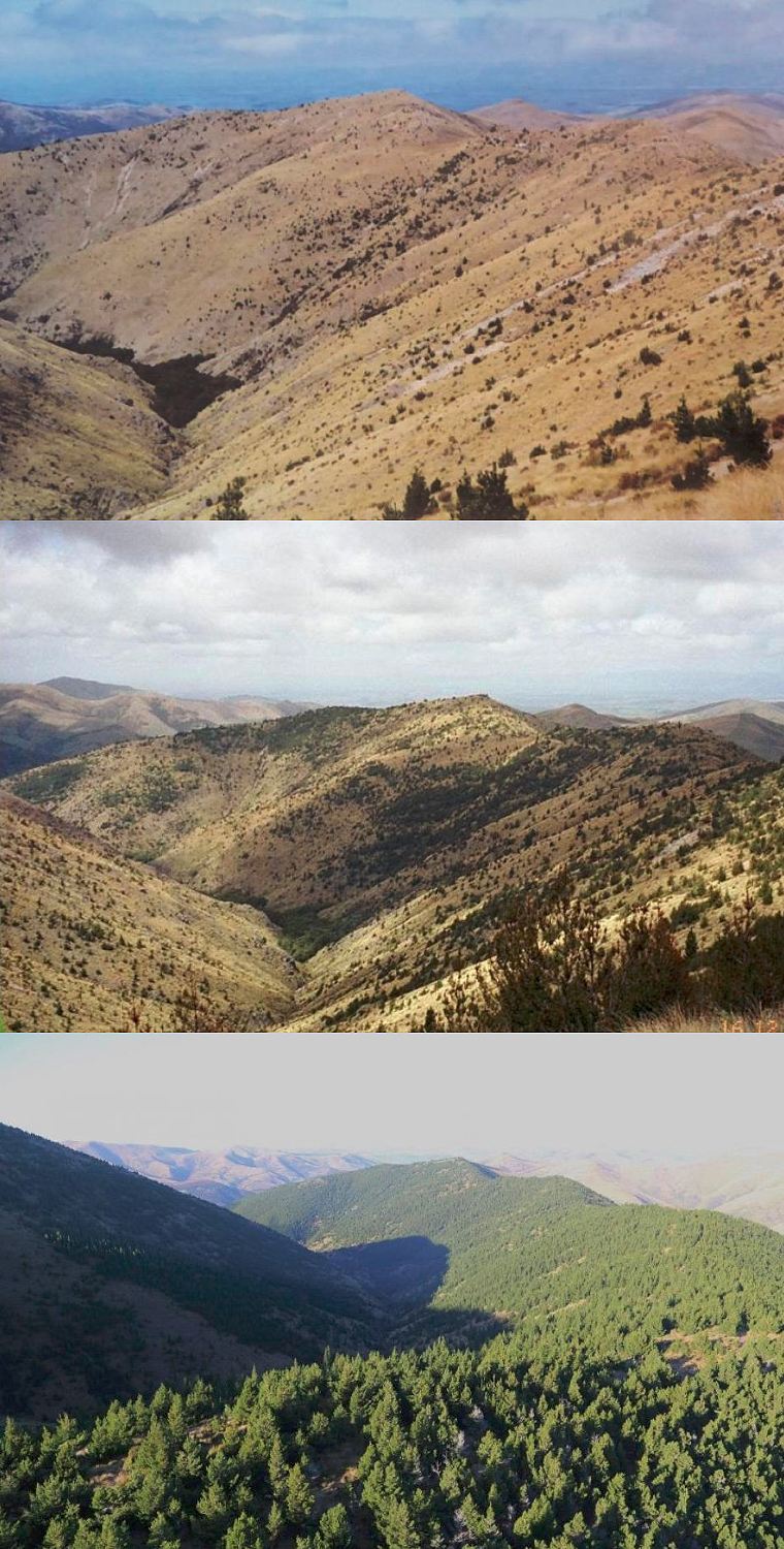 Images showing how wilding conifer can spread if left unchecked – Mid Dome, Upper Tomogalak catchment, Northern Southland, from 1998 to 2015.
